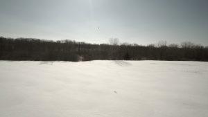SnowHawkStill001